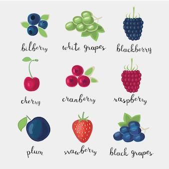 Цветной набор иллюстраций различных видов ягод