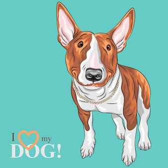 Color sketch of cheerful smiling excellent bull terrier dog in black and tan isolated