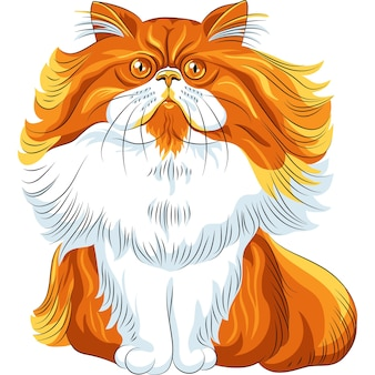 Color sketch cute red fluffy persian cat sitting