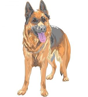 Color sketch dog german shepherd breed