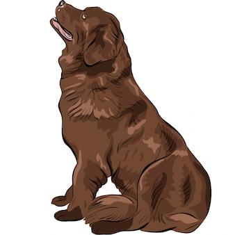 Окраска собаки породы ньюфаундленд