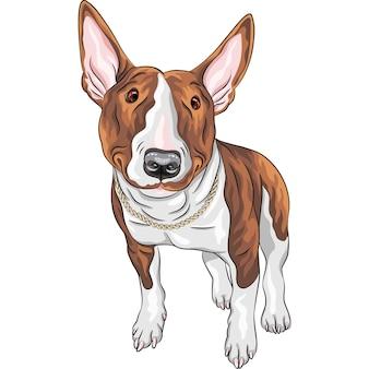 Цветной рисунок веселой улыбающейся отличной собаки бультерьера в черно-подпалых, изолированных на белом фоне