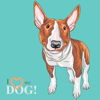 Цветной рисунок веселой улыбающейся отличной собаки бультерьер в черно-подпалых изолированных