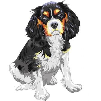 Цветной эскиз собаки кавалер кинг чарльз спаниель бре