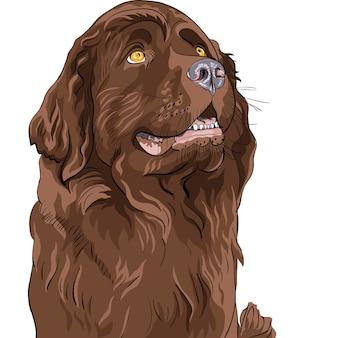 Цветной рисунок собаки породы ньюфаундленд сидит