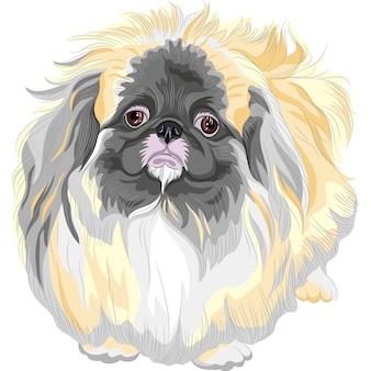 컬러 스케치 슬픈 검은 담비 페키니즈 개 (사자 개, 페키니즈 사자 개, 펠치 개 또는 페케)
