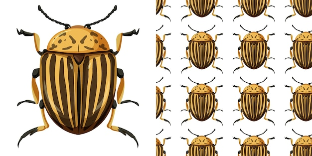 Colorado beetle insect and seamless background