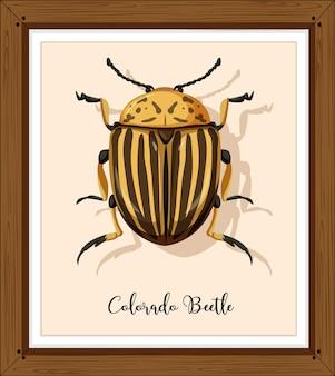 Колорадский жук на деревянной раме