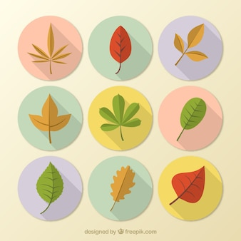 Autunno foglie colorate collezione