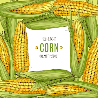 Colored background illustration with corn. design template with place for your text