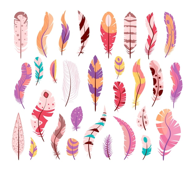Colored bird wing feather different shape isolated set