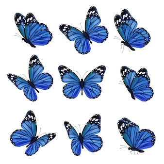 Colored butterflies. flying beautiful insects butterfly with decorated wings. illustration insect butterfly spring, pattern realistic wings in blue colored