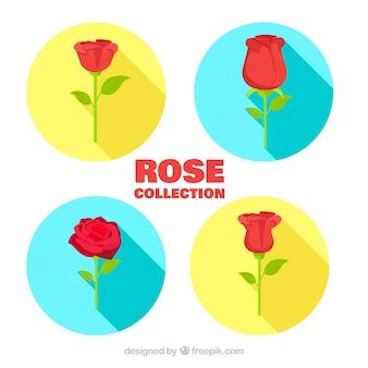 平らなバラの色付きサークル