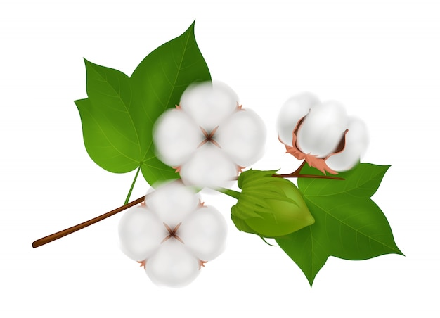 Colored cotton flower branch realistic composition with three beautiful flowers on white