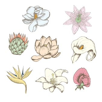 Set di fiori esotici botanici disegno colorato