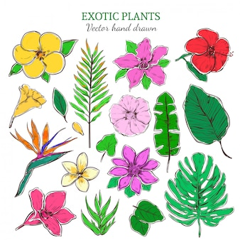 Colored exotic and tropical plants set