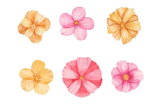 色の花が白い背景の水彩イラストを設定