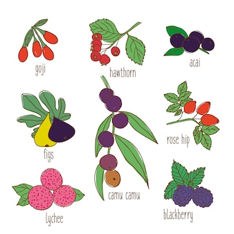 Colored hand drawn botanical food set