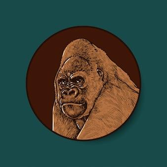 Colored illustration of gorilla
