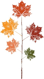 Отпечаток опавшего осеннего листа цветной тушью. акварельный лист.