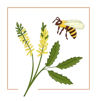 Colored melilot or sweet clover with bee.