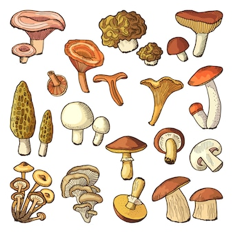 Colored nature vector illustrations of mushrooms.