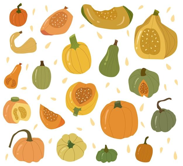 Цветная коллекция тыквы, осенью овощной целиком и ломтиком. зеленые, желтые и оранжевые тыквы декоративные. векторные рисованной иллюстрации шаржа на белом фоне. все элементы изолированы.