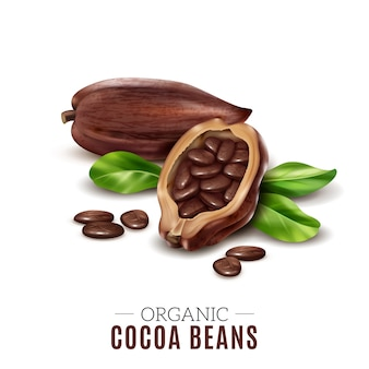 Colored realistic cocoa composition with organic cacao bean headline and broken beans