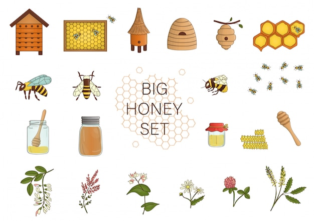 蜂蜜、蜂、マルハナバチ、蜂の巣の色セット。