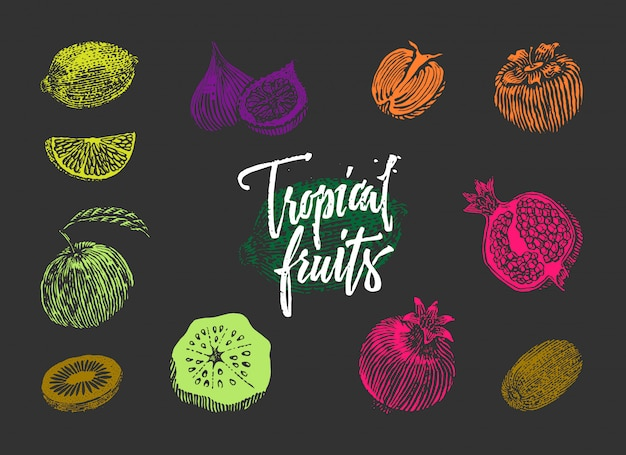 Colored tropical fruits collection