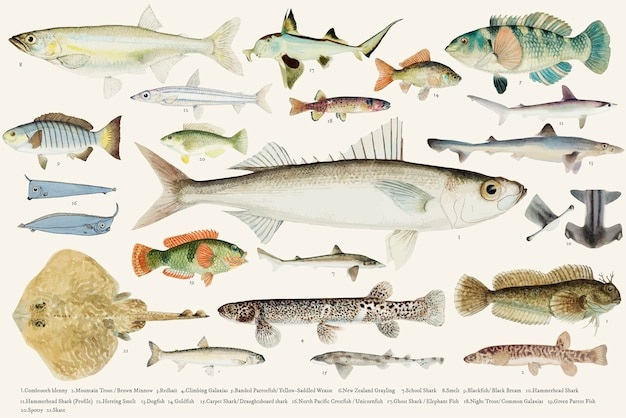 Colored vector illustration of fish drawing collection