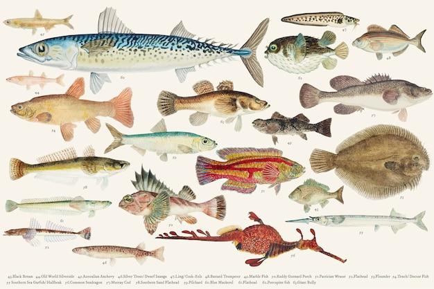 魚を描くコレクションの色のベクトル図