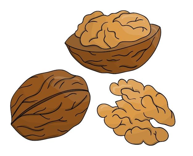 色付きのクルミのアイコン。分離されたモノクロナッツのセット。分離された漫画や落書きスタイルのフード線画イラスト