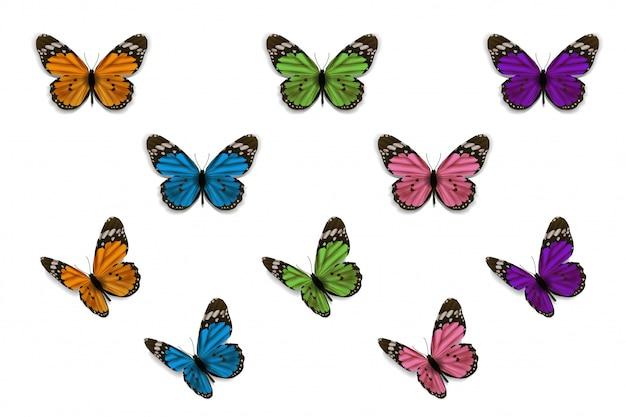 白い背景ベクトルデザインのcolorflu蝶