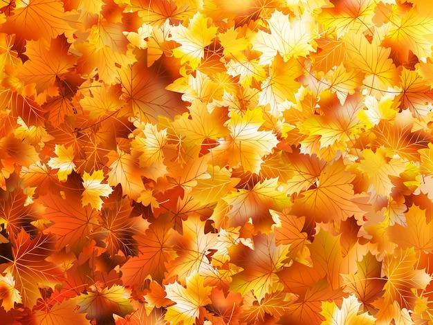 秋の落ち葉で作られたカラフルで明るい背景。