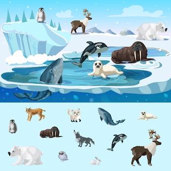 カラフルな北極圏の野生生物の概念