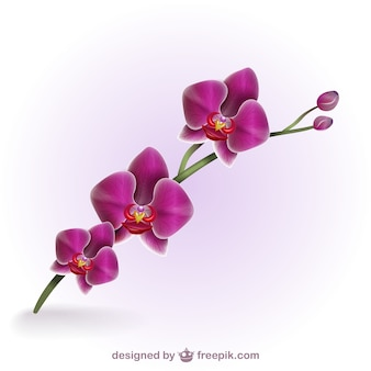 Colorful artistic orchid