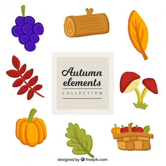 Colorful autumn items collection