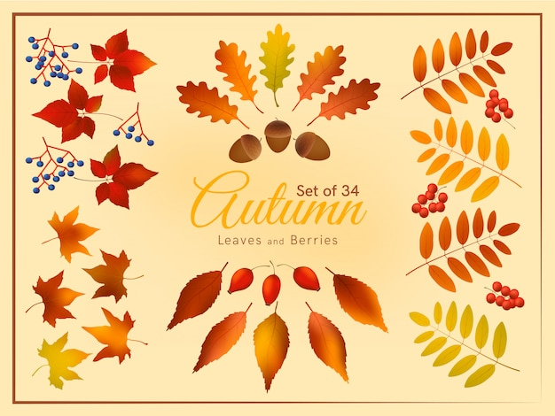 Colorful autumn leaves and berries set, autumn forest templates.