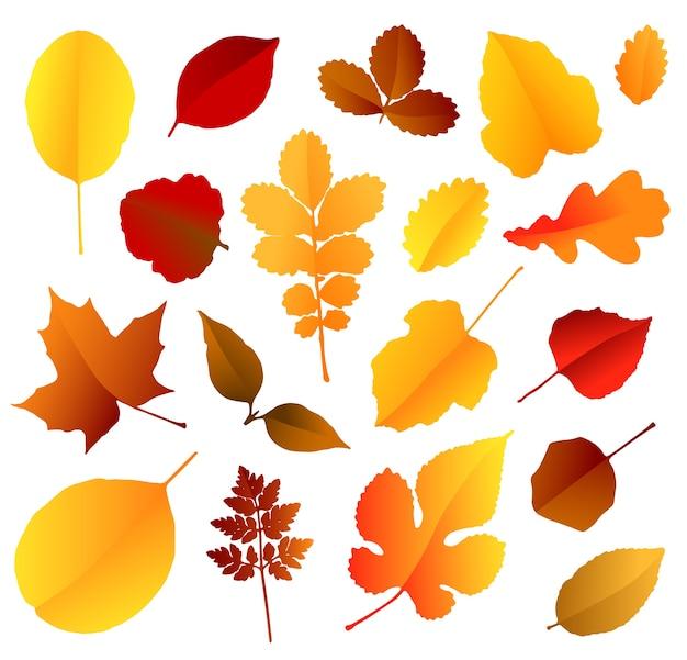 色鮮やかな紅葉は、白い背景で隔離のセット。