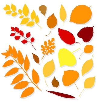 Красочные осенние листья на белом фоне. векторная иллюстрация