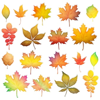 Красочные осенние листья на белом фоне вектор