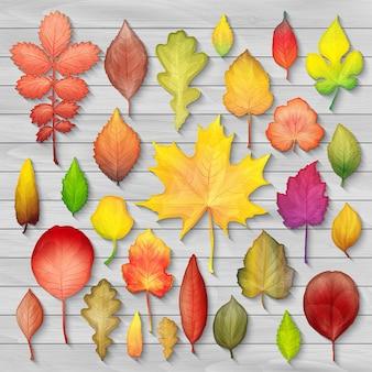 Красочные осенние листья на деревянном фоне вектор