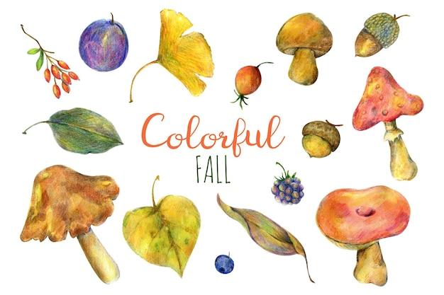 Colorful autumn watercolor illustration of mushrooms autumn leaves dog rose plum acorn berries