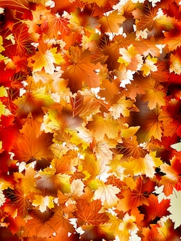 Colorful background of autumn leaves.