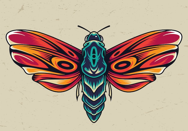 Colorful beautiful butterfly concept