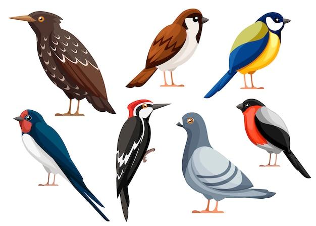 カラフルな鳥のコレクション。ハト、スズメ、シジュウカラ、ツバメ、キツツキ、ムクドリ、ウソ。鳥のアイコン。白い背景の上の図