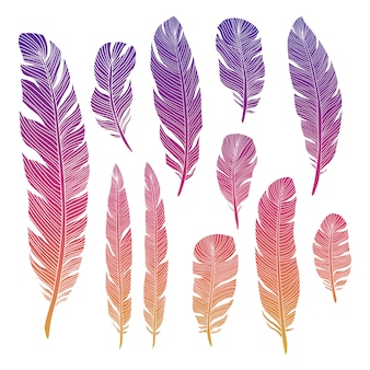 Colorful birds feather