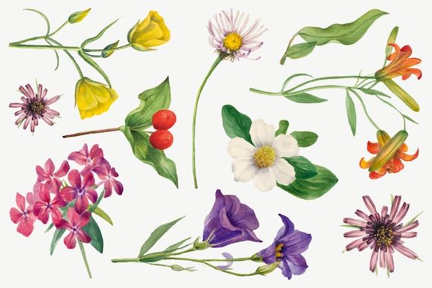 Set di illustrazioni botaniche vettoriali con fiori che sbocciano colorati, remixate dalle opere di mary vaux walcott