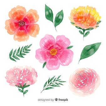 Colorful blooming flowers with leaves background